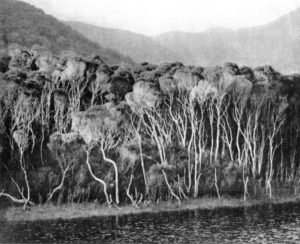 Tidal River, 24 x 29 cm, Photogravure