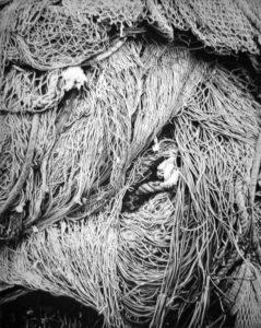 Networks II, 48 x 39 cm, Photogravure